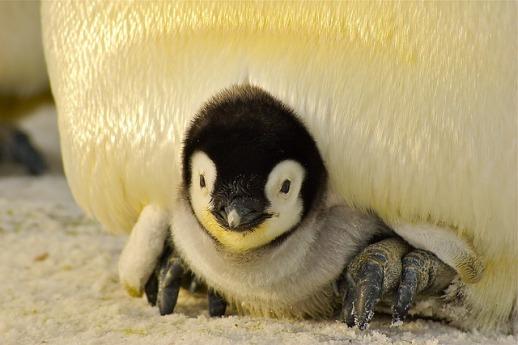penguin-429125_640